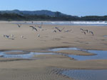 Coffs Harbour - Park Beach
